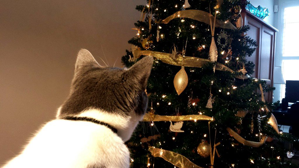 Secure Christmas trees to keep cats safe