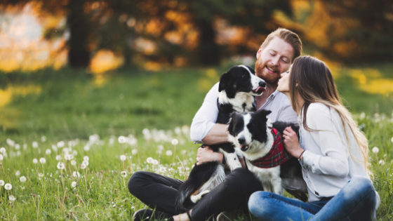 Pet Insurance – A Must-Have for All Pet Owners