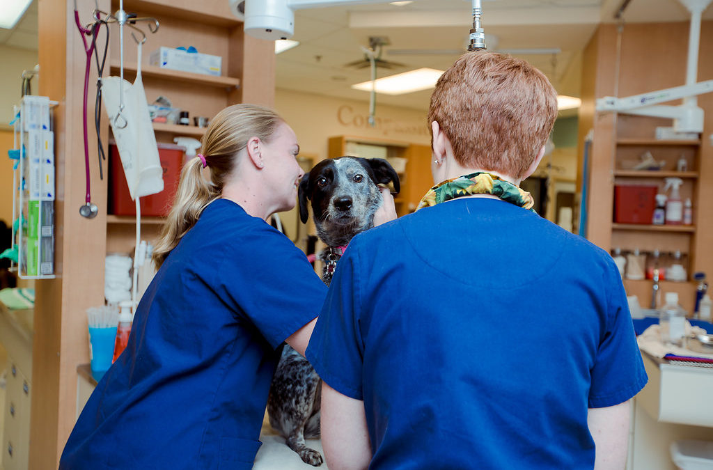 What Happens in the Back of our Animal Emergency Hospital?