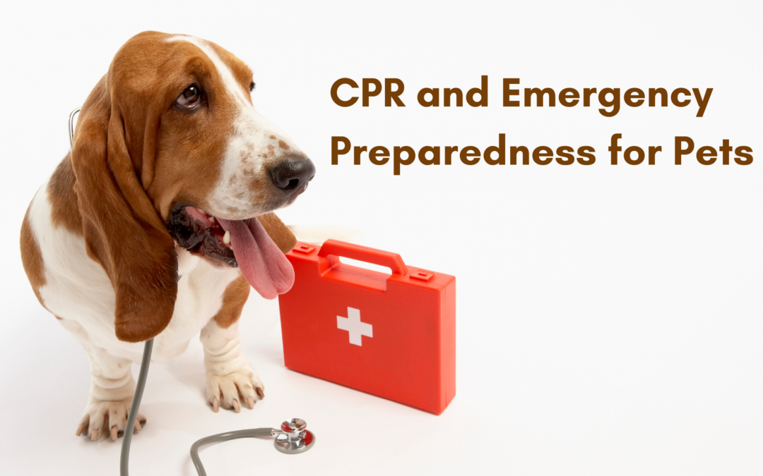 CPR and Emergency Preparedness for Pets